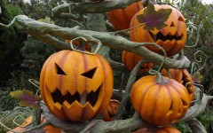 Gloucester encourages safe Halloween
