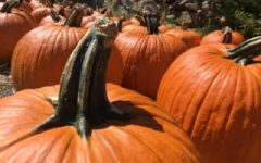 Fall in love with these fun activities