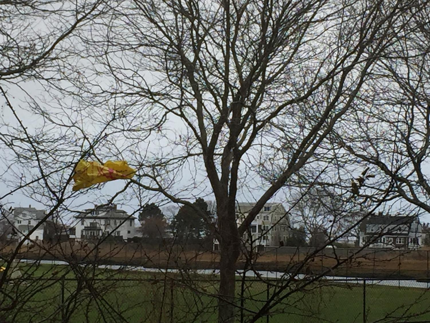 A plastic bag hangs from a tree outside GHS