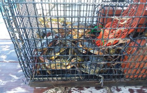 GHS students take initiative to curb crab infestation