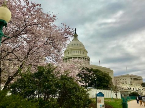 View of the US Capitol in March 2017, taken on our 8th grade trip to D.C.